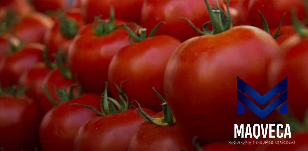 silmaca - Nutrición del Tomate – MAQVECA