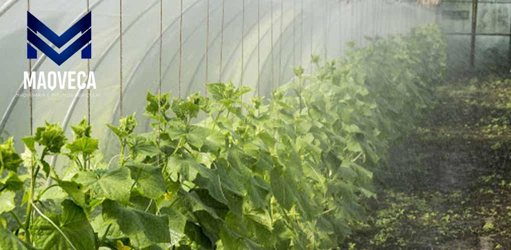 silmaca - Riego y Fertilización de la planta de Naranja – MAQVECA